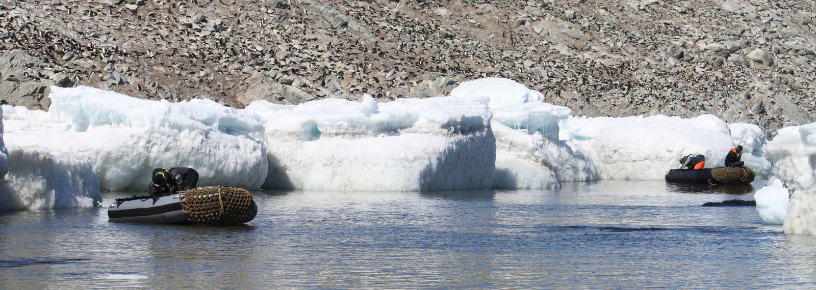 Antarctica, Danger Islands, Heroina Island