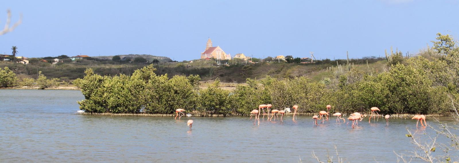 Flamingo, St Willibrordus