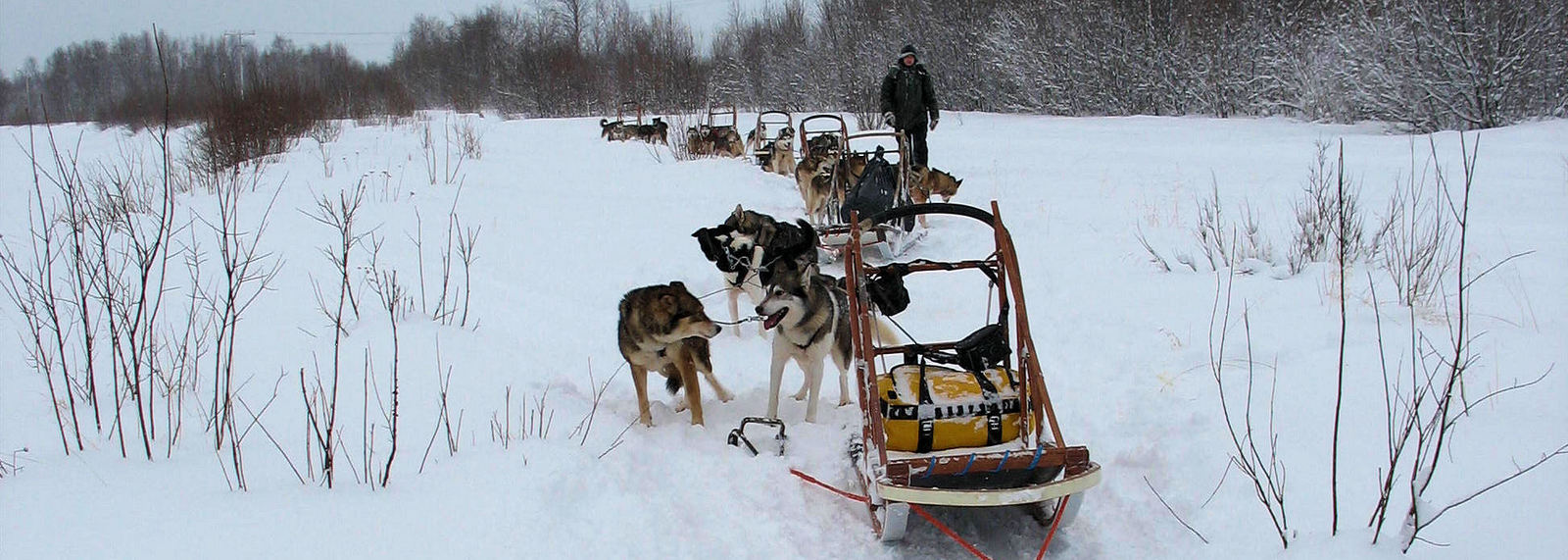 Dog Sledding Tour, Inari