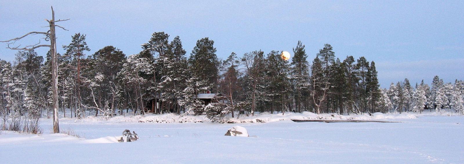 Dog Sledding Tour, Inari