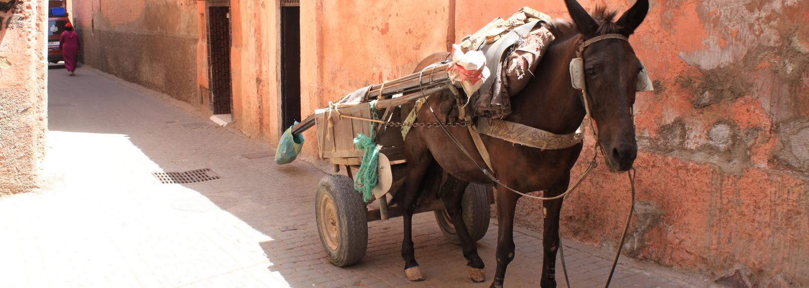 Donkey in the street, Marrakech