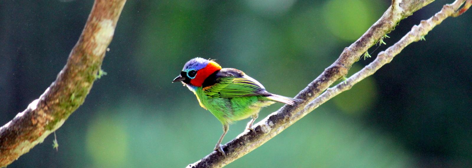 Ubatuba, Bird